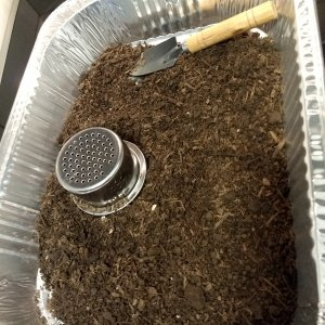 00 - stuff sifted out of soil